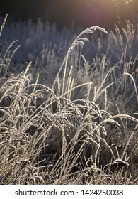 macro closeup photo showing grass covered wirth hoar frost in winter season