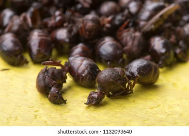 Macro closeup pile of edible roasted flying ants on yellow table known as nucu in Chiapas, Mexico