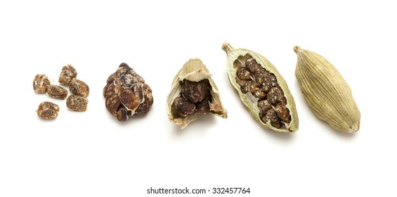 Macro Closeup of pod to seeds of Organic Green or True Cardamom (Elettaria cardamomum) isolated on white background.