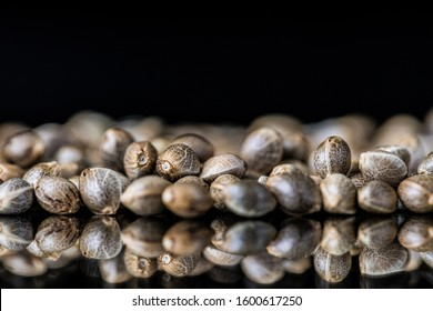 Macro Close-up Soft Focus of Cannabis Marijuana Seeds on a reflective black background
