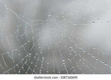 macro closeup of sparkling rain dew drops on a spider mesh web cobweb resembling beautiful jewelry