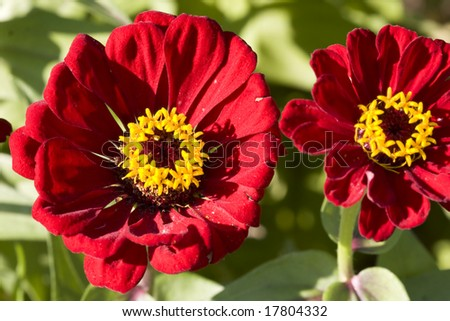 Macro Color Photograph Flowers Red Petals Stock Photo Edit Now
