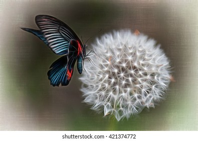 A macro composition of a butterfly on a beautiful dandelion