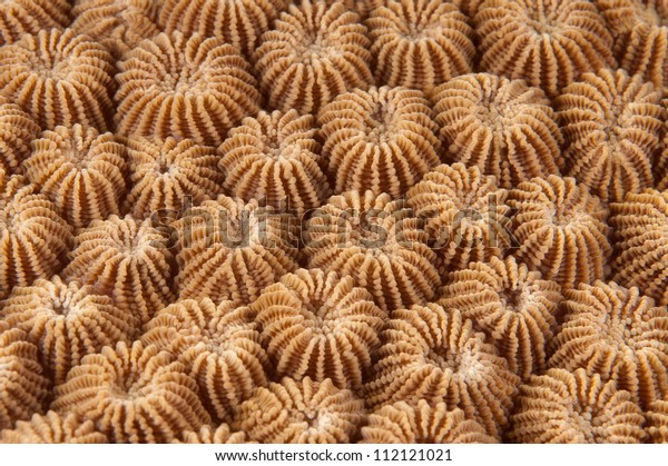 Macro coral texture