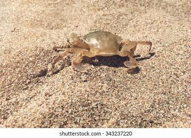 Macro crab on the sand