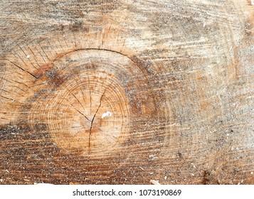 macro cut wood texture, beech background
