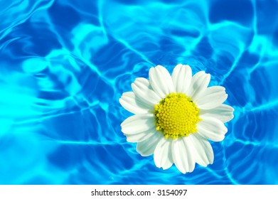 Macro of a daisy flower against water background (water series B, no:2)