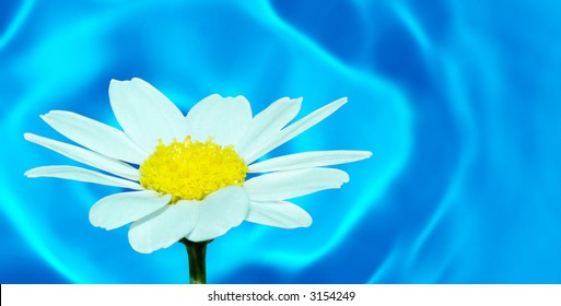 Macro of a daisy flower (selective DOF) against water
