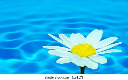 Macro of a daisy flower (selective DOF) against water (series B, no 3)