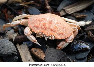 Macro of dead crab in tidal zone at Tonsina Point, Seward, Alaska
