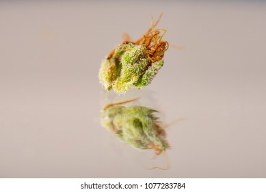 Macro detail of cannabis calyx (sour tangie strain) isolated on reflective background with visible trichomes - Medical marijuana concept