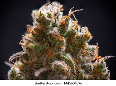 Macro detail of Cannabis flower (sour diesel strain) isolated over black background, medical marijuana concept