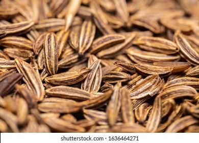 Macro detail of caraway seeds - background texture