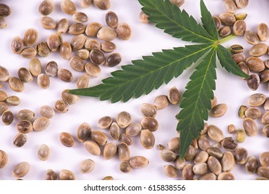 Macro detail of marijuana seeds and tiny leaf over white background - cannabis growing concept