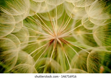 macro detail in the middle of a dandelion with green background