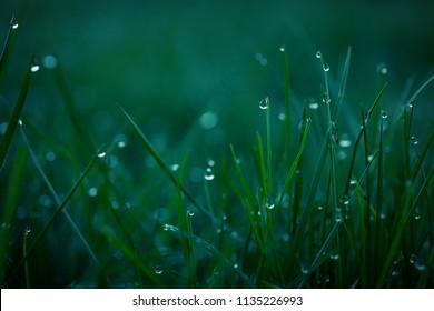 macro detail of morning dew