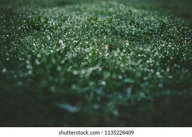 macro detail of morning dew on a spring meadow