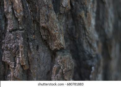 Macro Detail of Tree Bark