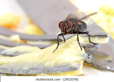 Macro of a Dirty House Fly on a Fork covered in Yellow Butter