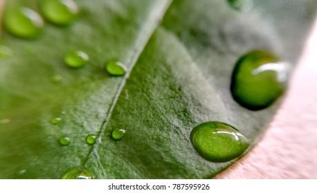macro droplet water on green leaf
