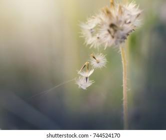 A macro dry flower.