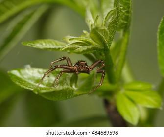 Macro en face of spider rest in green tree leaves