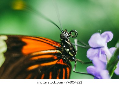 Macro extreme close up of a butterfly pollinating a flower