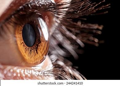 macro eye brown