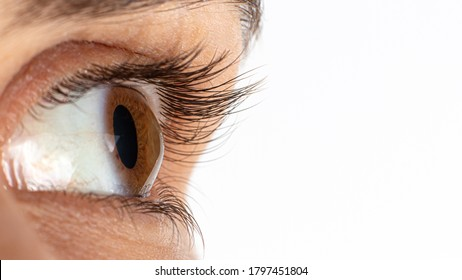 Macro eye photo. Keratoconus - eye disease, thinning of the cornea in the form of a cone. The cornea plastic. Close up, banner. Banner with place for text.