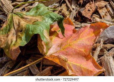 Macro fall leaf litter