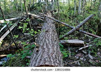 Macro fallen tree trunk storm damage tree bark surface rough crevices detail texture background