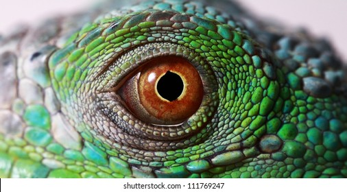 a macro of a fantastic green iguana eye