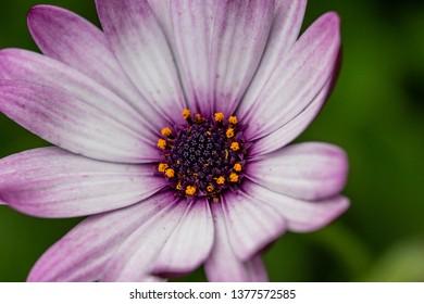 Macro Flower Blooming