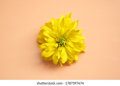 Macro flower. Natural background with Place for text.