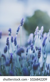 Macro flowers. Nature view