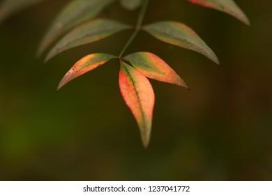 Macro foliage bokeh background