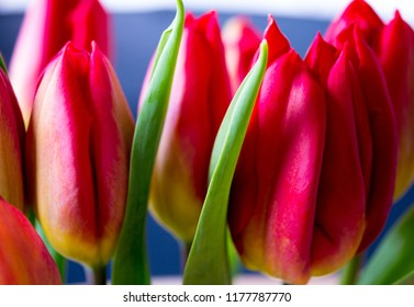 Macro foto red tulip
