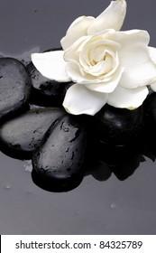 Macro of gardenia flowers with zen stones