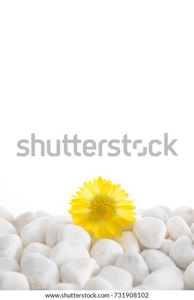Macro of  gerbera on pile of white stones
