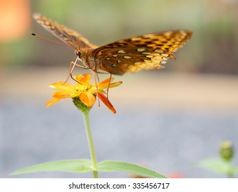 Macro of Golden Butterfly on a Yellow Flower