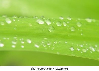 macro grass after the rain