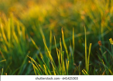 Macro of the grass at sunset