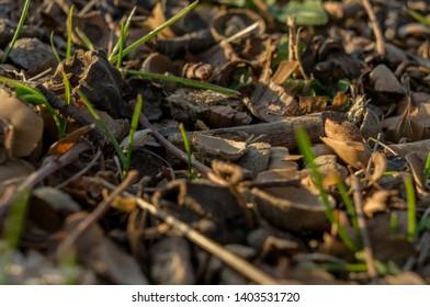 macro of ground with nutshells and rocks