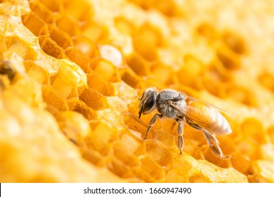 Macro group of bees on honeycomb studio shoot. Food or nature concept
