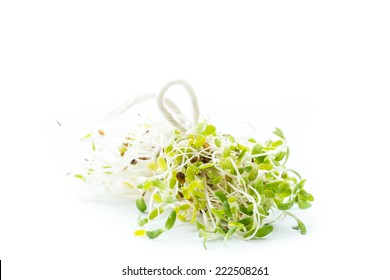 macro of a group of organic broccoli sprouts isolated on a white background