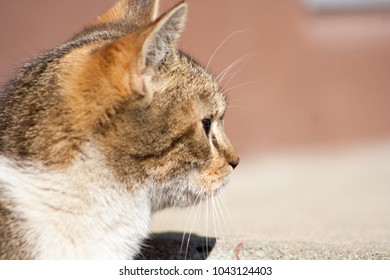macro head of a small cat
