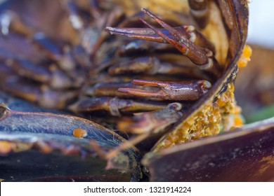 Macro horseshoe crab legs