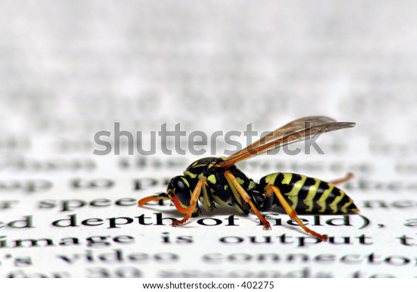 macro of humphrey, my pet wasp, displaying depth of field - or the lack thereof