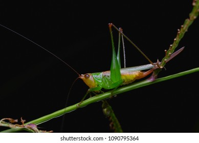 macro image of a colorful katydid