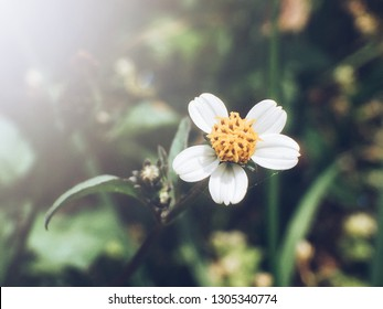 Macro image of a flower with morning light. Processed with VSCO with a5 preset. Soft focus